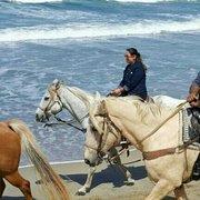 Monterey Bay Equestrian Center 227 Photos Amp 173 Reviews