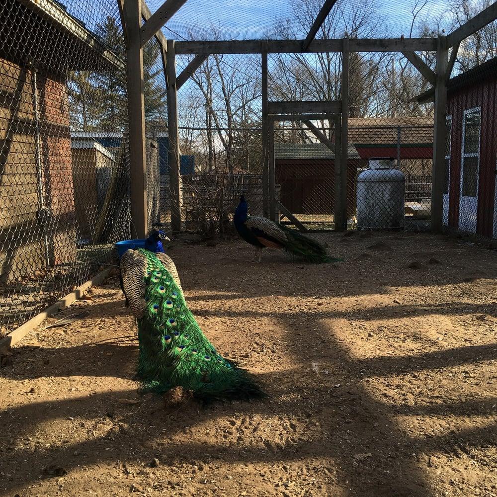 Forsyth Park Zoo: 125 Lucas Ave, Kingston, NY