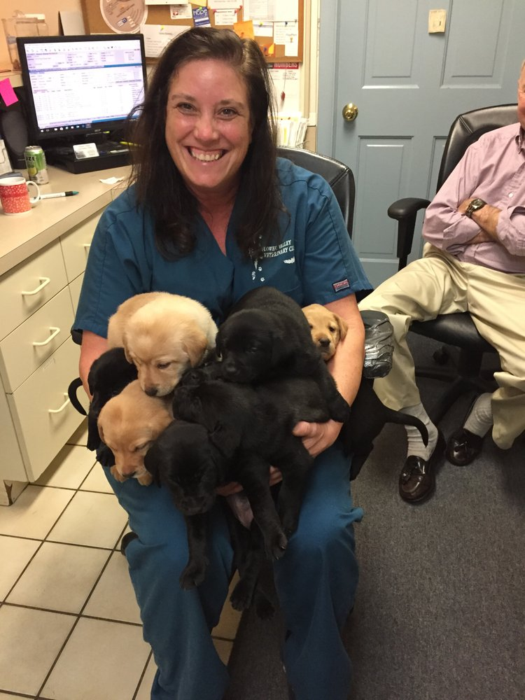Flower Valley Veterinary Clinic: 4201 Norbeck Rd, Rockville, MD