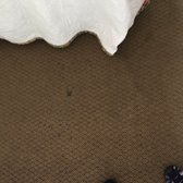 Photo Of Suburban Extended Stay Hotel Myrtle Beach Sc United States Rugs
