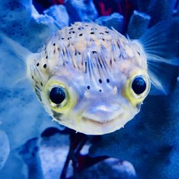 Mark's Tropical Fish - Studio City - Yelp