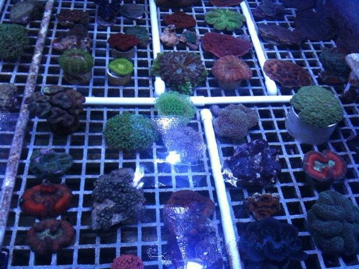 The Coral Corral: 13510 Prestige Pl, Tampa, FL
