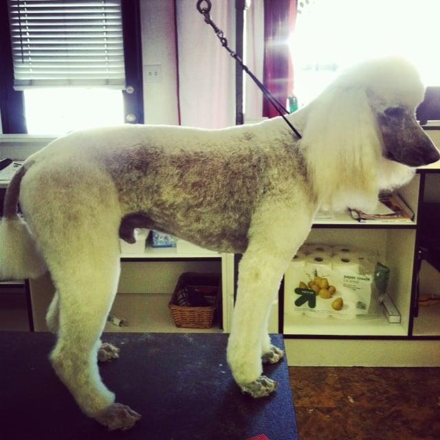 Mobile Dog Grooming Monrovia