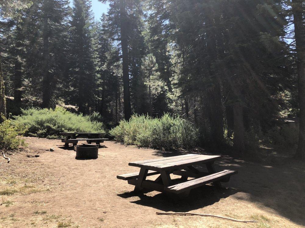 Quaking Aspen: Highway 190, Ponderosa, CA