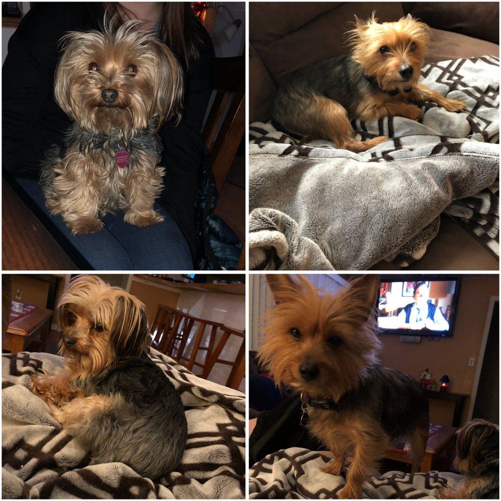 The Pet Spa: 424 N Franklin St, Holbrook, MA