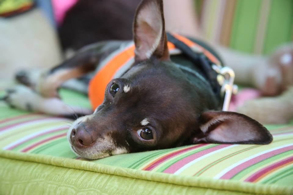 Haven Dog Rescue Citrus Heights