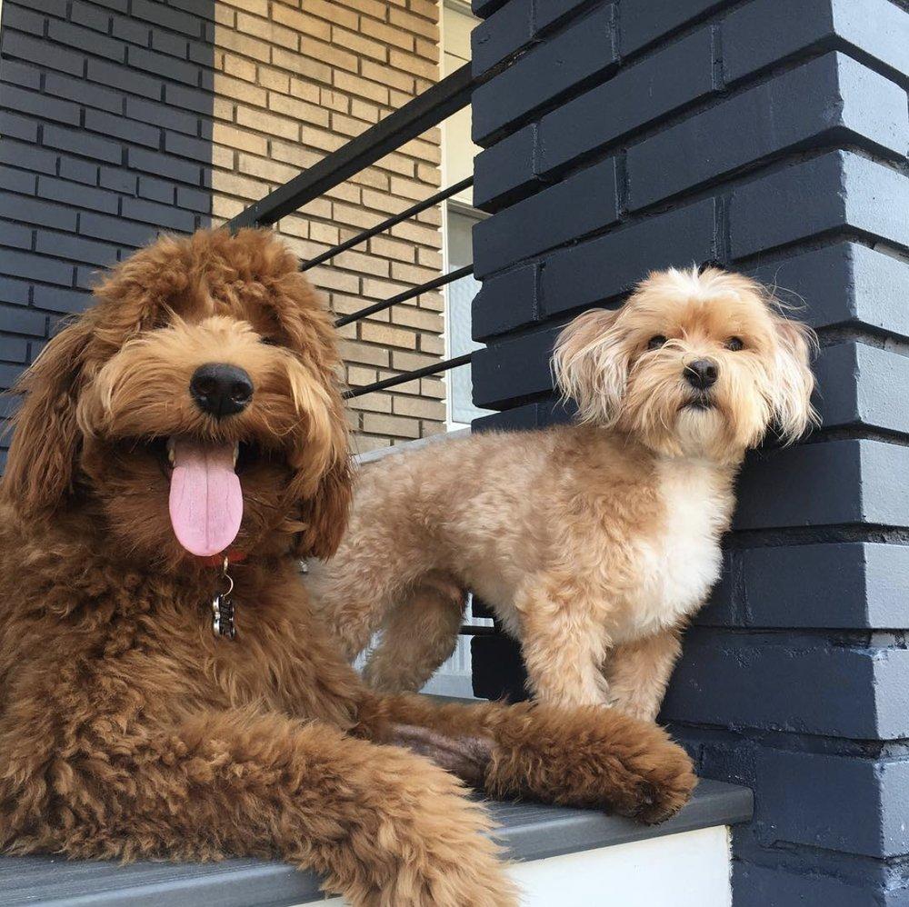 Peticular Charm Pet Care
