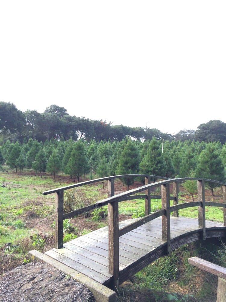Larsen's Christmas Tree Farms - Christmas Trees - 391 Marshall Ave, Petaluma, CA - Phone Number ...