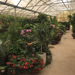 Photo Of Whitfill Nursery Gilbert Az United States Green House For