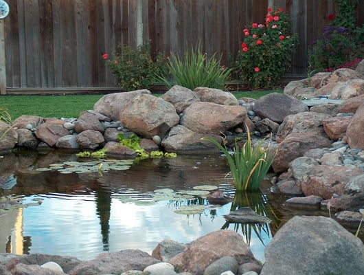 Water Garden Pond Supplies Nurseries Gardening 1852 W 11th