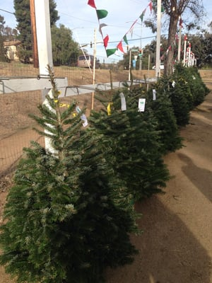 pinery christmas trees 5354 sweetwater rd bonita ca mapquest - Pinery Christmas Trees
