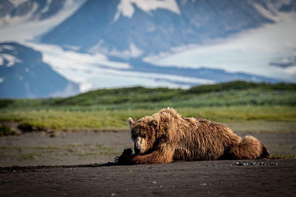 Sasquatch Alaska Adventure Co: 2260 Kachemak Dr, Homer, AK