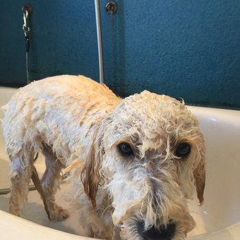 Rub a dub dog do it yourself dog wash 22 photos 96 reviews pet photo of rub a dub dog do it yourself dog wash solutioingenieria Gallery