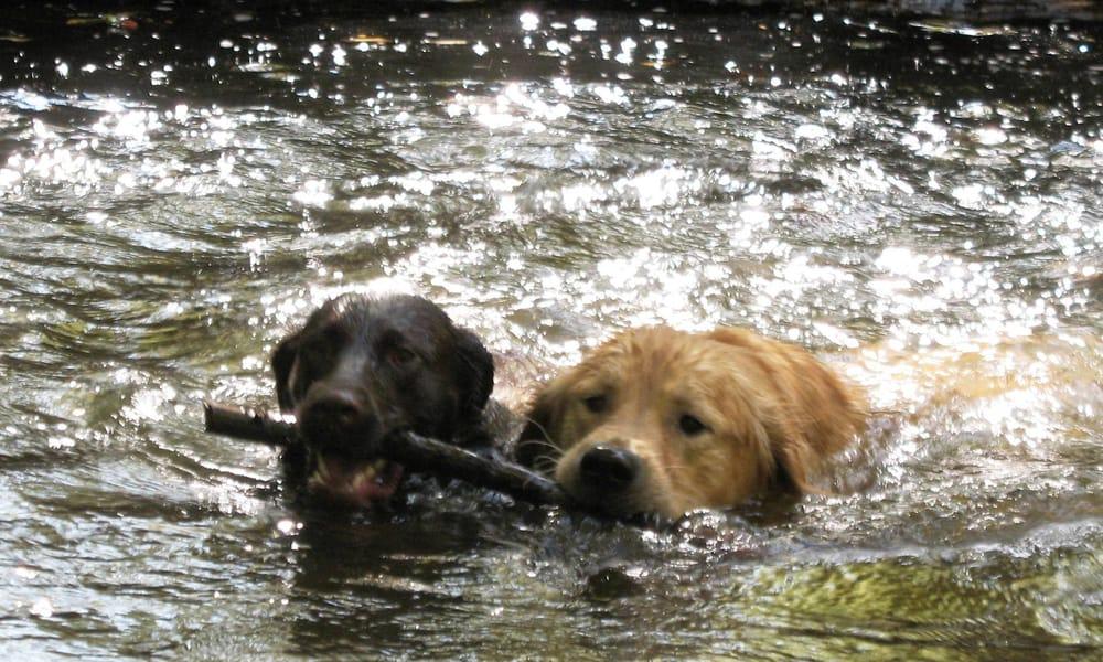 Cardio Canine: Berwyn, PA