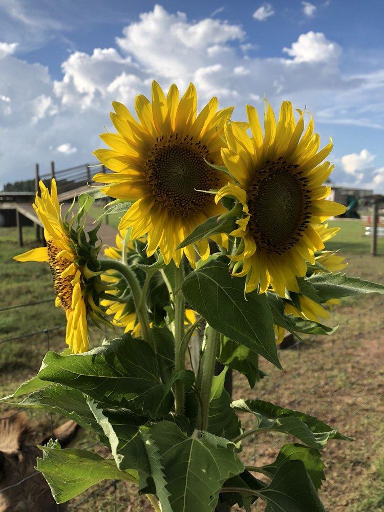 Holland Farms: 2055 Homer Holland Rd, Milton, FL