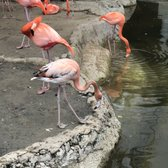 Audubon Zoo - 1456 Photos & 323 Reviews - Aquariums - 6500 Magazine