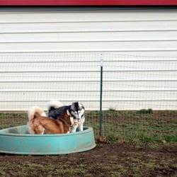 dog boarding albany oregon