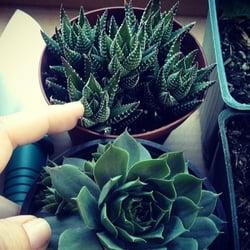 Photo Of Kettle S Nurseries Pasadena Ca United States Tiny Succulents