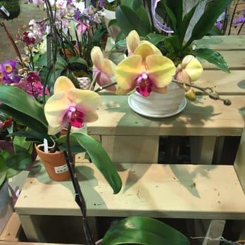 Armstrong Garden Centers 26 Photos 39 Reviews Gardening Centres 9939 Carmel Mountain