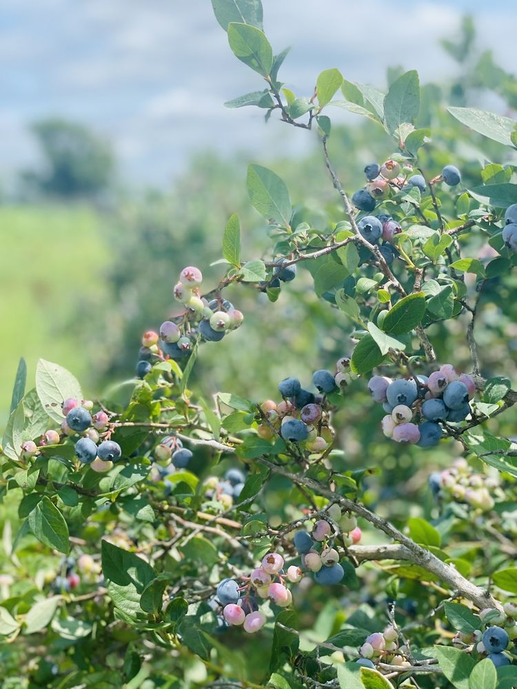 Lockbriar Farms: 10051 Worton Rd, Chestertown, MD