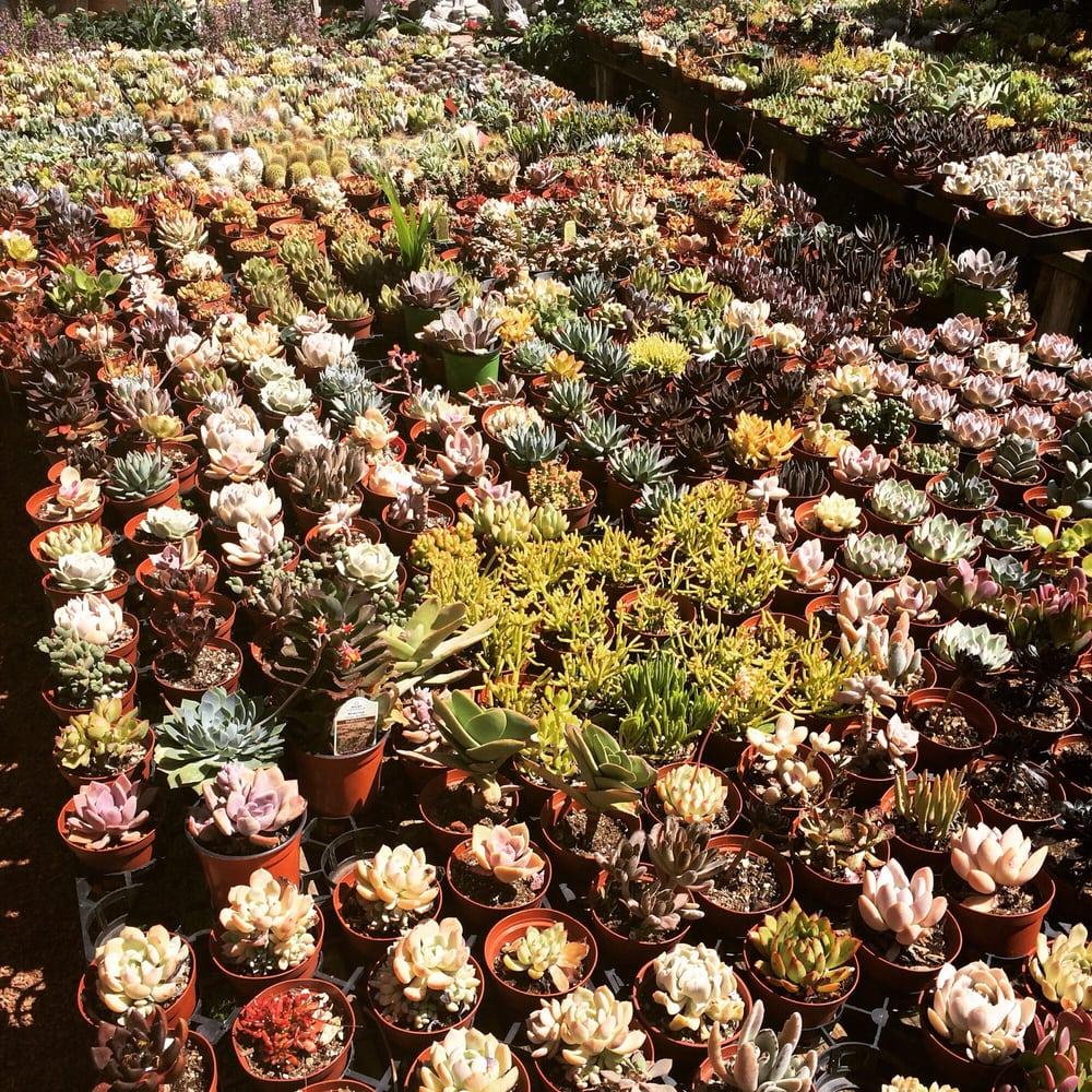 Photo Of Hashimoto Nursery Los Angeles Ca United States Tons Succulents