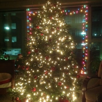 Mr. Jingles Christmas Trees - CLOSED - Christmas Trees - 535 Quince ...