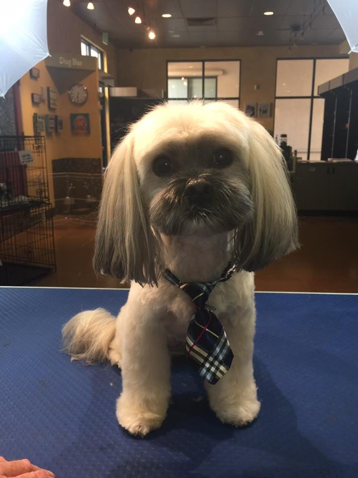 The pampered pet grooming spa 203 photos 102 reviews pet the pampered pet grooming spa 203 photos 102 reviews pet groomers 7720 brentwood blvd brentwood ca phone number yelp solutioingenieria Images