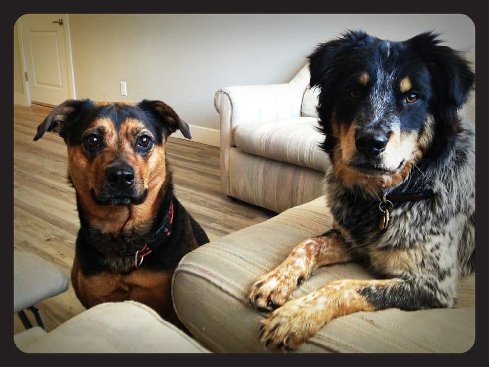 ComeSitStay Pet Boarding Grooming & Daycare: 7001 S 181st St, Omaha, NE