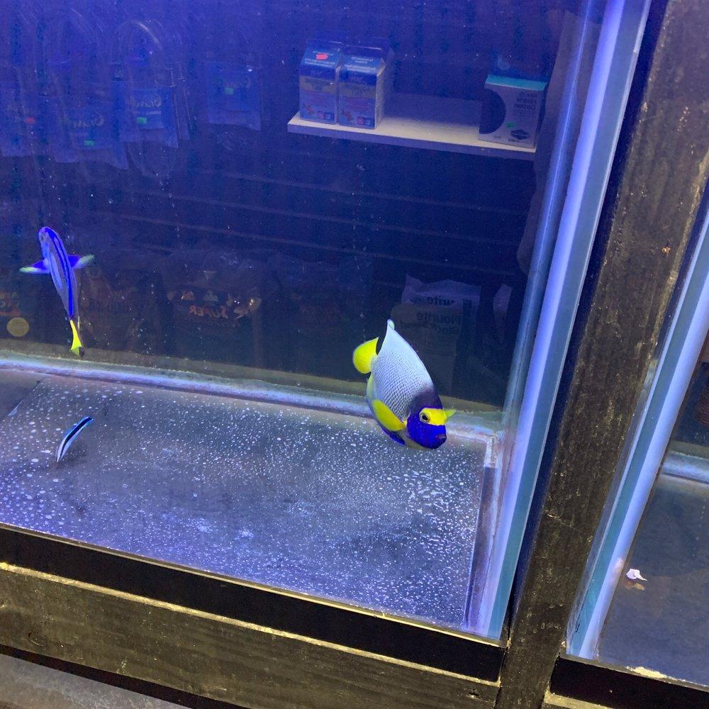 All Things Aquariums