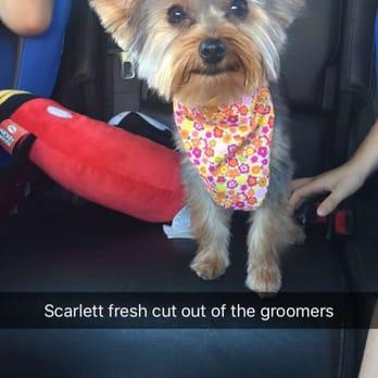 Dandy Dog Grooming Chula Vista