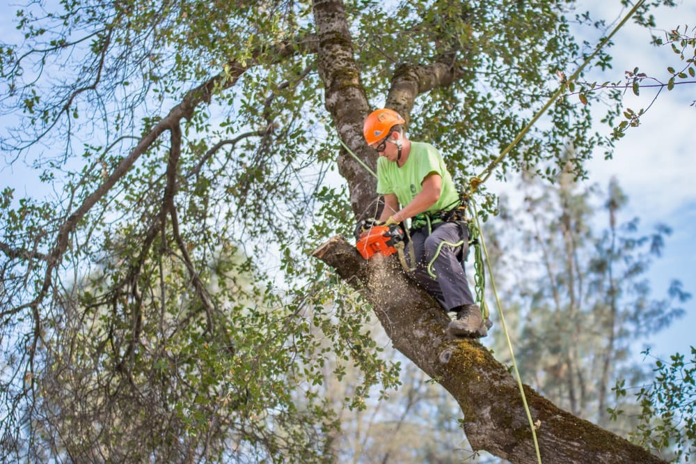 Frederic's Landscape & Tree Service: 3231 Columbia Ave, Corning, CA