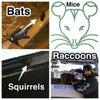 Bat Removal & Prevention: 1097 S Lapeer Rd, Oxford, MI