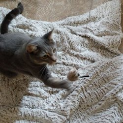 San Diego Cat Boarding & Sitting - Pet Boarding - Serra Mesa