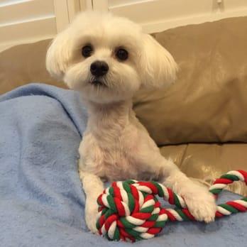 Dog Grooming Fullerton
