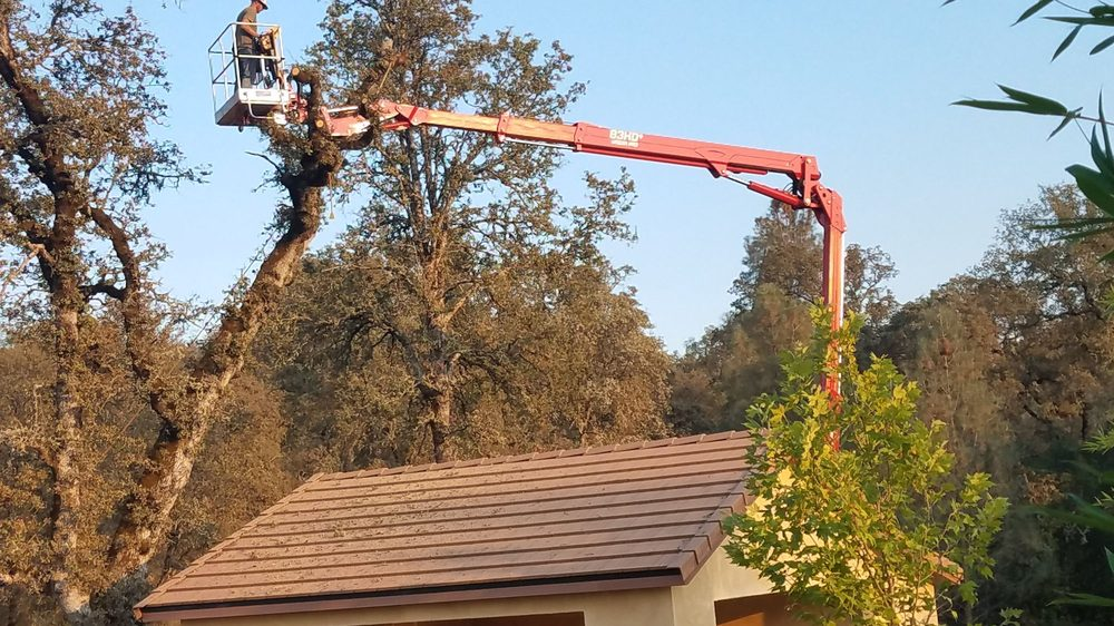 Morgan Tree Service: Oroville, CA