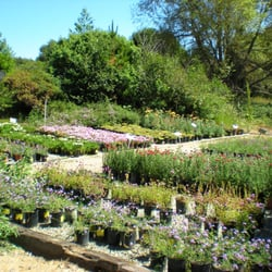 Photo Of Native Revival Nursery Aptos Ca United States Our Blooming Perennial