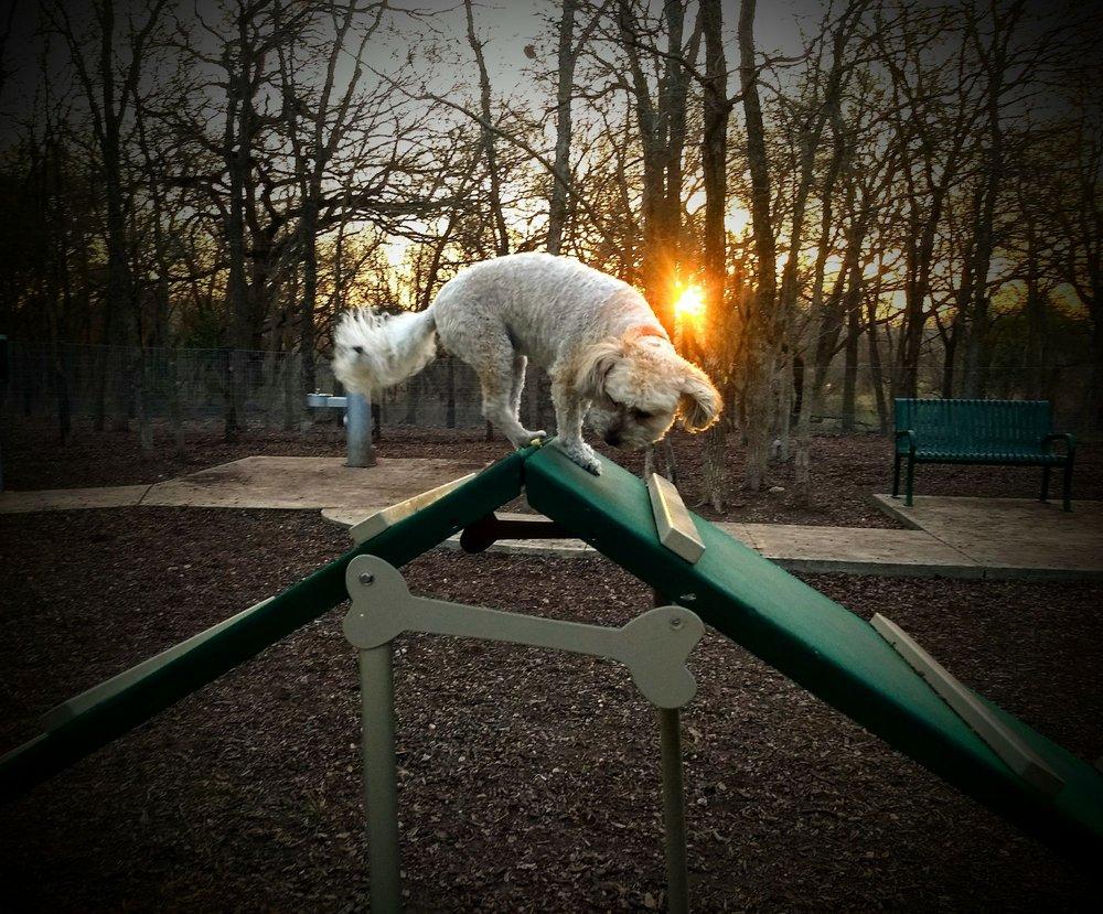 Lady Bird Johnson Dog Park