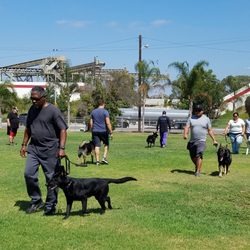 312b2ca2ff6e Wolfgang Expert Dog Training - 56 Photos   43 Reviews - Pet Training - 350  W Rosecrans Ave