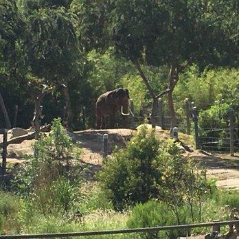 Los Angeles Zoo & Botanical Gardens - 4767 Photos & 1349 Reviews ...