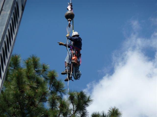 Don Taylor Tree Service: 2850 W Hayden Ave, Hayden, ID