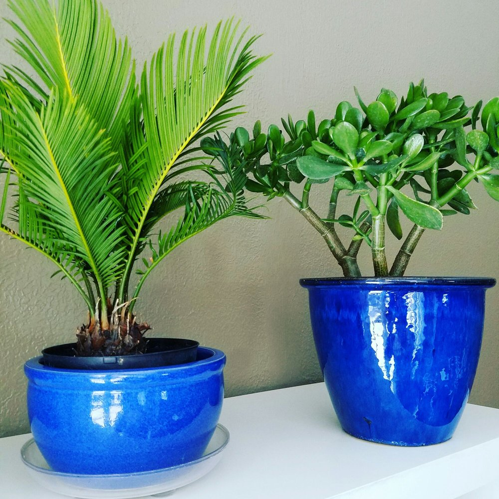 Healthy, beautiful indoor plants and pots from Genrich's ...