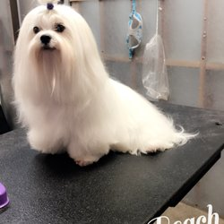 Bubbles pet spa 33 photos 71 reviews pet groomers 2110 photo of bubbles pet spa manhattan beach ca united states look at solutioingenieria Gallery