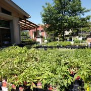 Photo Of Shoal Creek Nursery Austin Tx United States