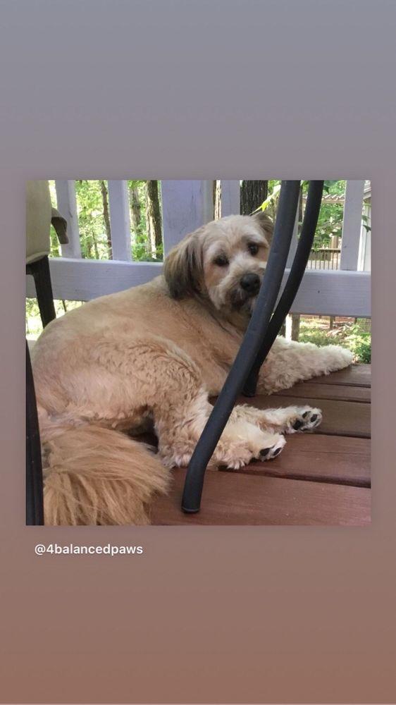 Dog Gone Beautiful: 1301 W Poinsett St, Greer, SC