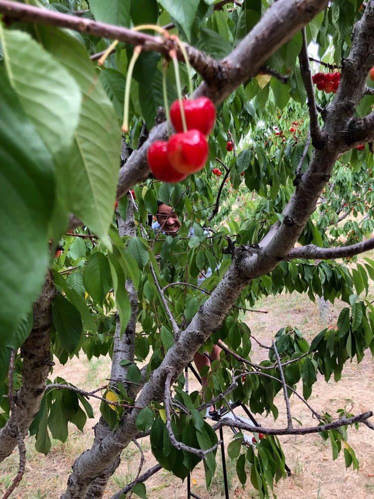 Williams Fruit Ranch: 2455 W South Slope Rd, Emmett, ID