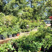 Photo Of Jrn Nursery Houston Tx United States