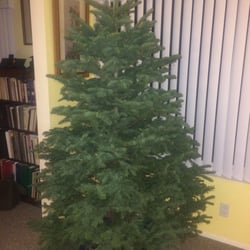 Delancey Street Christmas Trees - CLOSED - 19 Reviews - Christmas ...