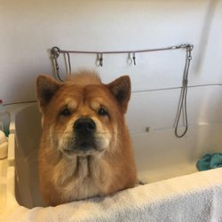 Posh wash dog wash 18 photos 48 reviews pet groomers 5940 photo of posh wash dog wash glendale az united states fresh solutioingenieria Image collections