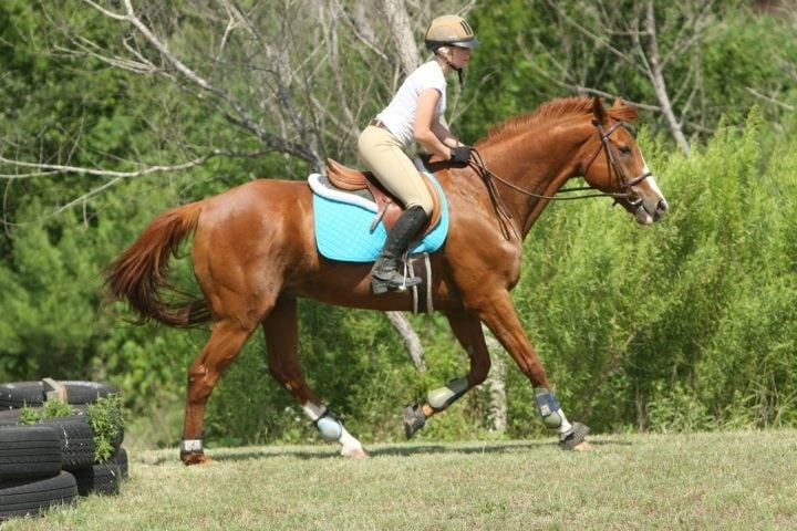Sterling Hunter / Jumpers: 13304 Wright Rd, Buda, TX