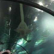 shark encounter 16 fotos aquarium 6184 sea harbor dr. Black Bedroom Furniture Sets. Home Design Ideas